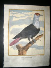 Sonnerat India 1782 Antique Hand Col Print. Pigeon